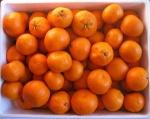 oranges_satsumas